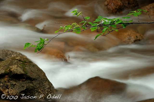 Branch and stream