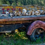 Skulls on a truck, Park County, CO (HDR Image)