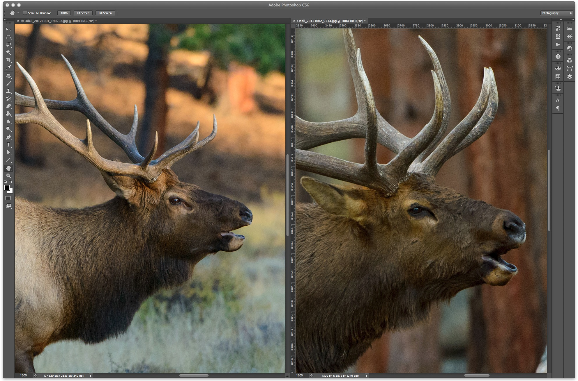"When scaled to a 12x18"" print at 240ppi, the D800 image (left) is as good or better in terms of noise than the D4 image (right). Click image to enlarge."