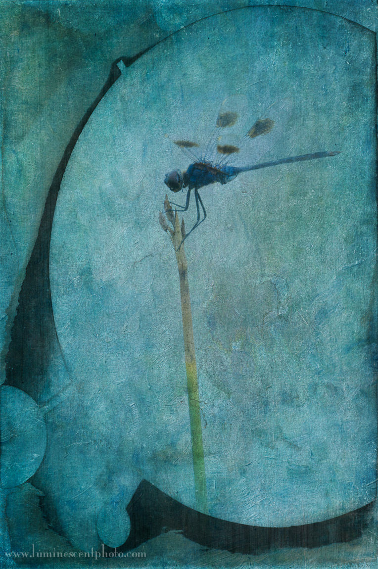 Dragonfly, Viera, FL. I used textureblending to create this image.