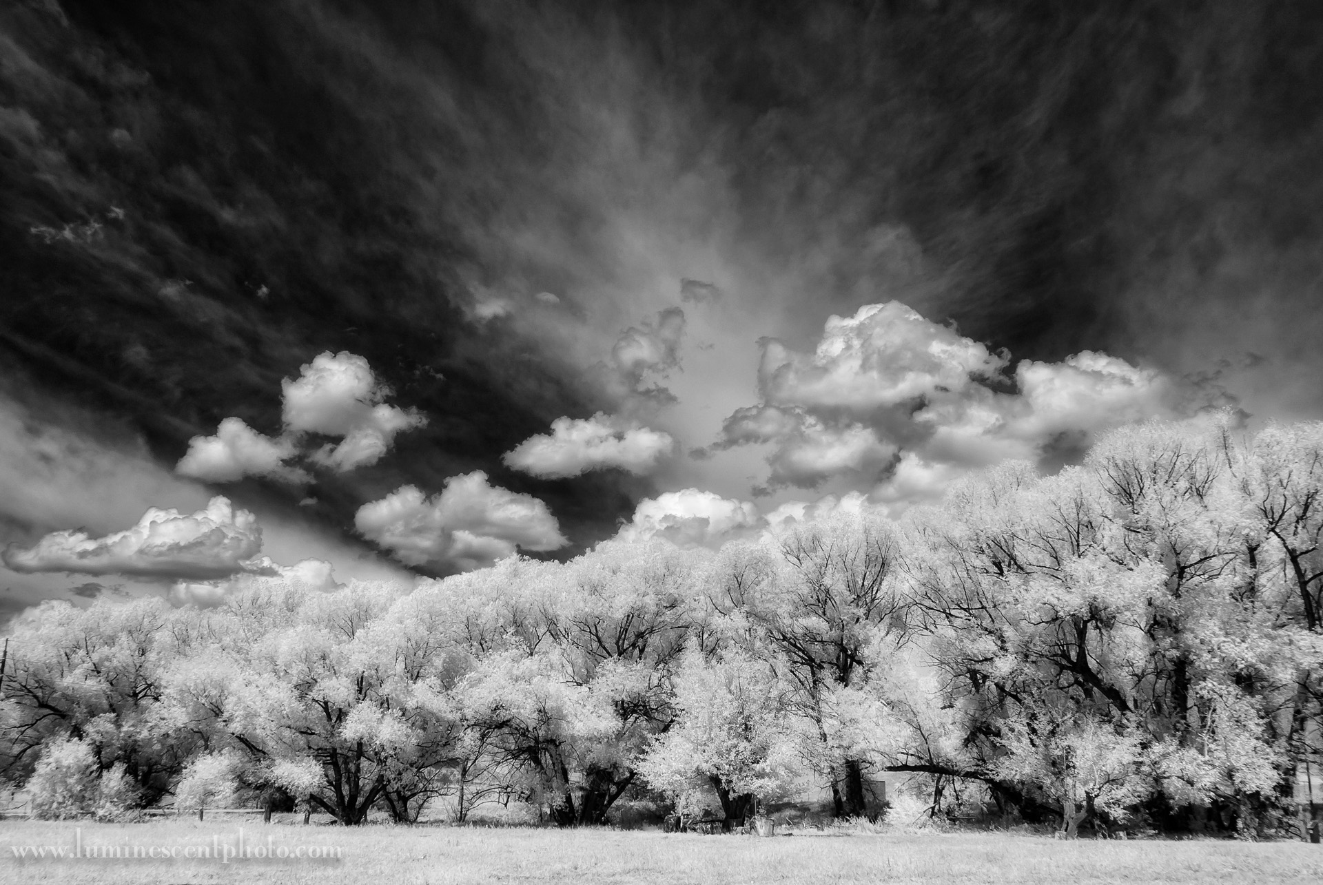 Cottonwoods and Clouds, Colorado Springs, CO. Captured with an infrared-coverted Nikon 1 V1 camera.