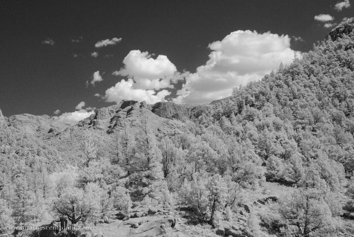 Super-color IR image converted to monochrome in Lightroom (no adjustments)
