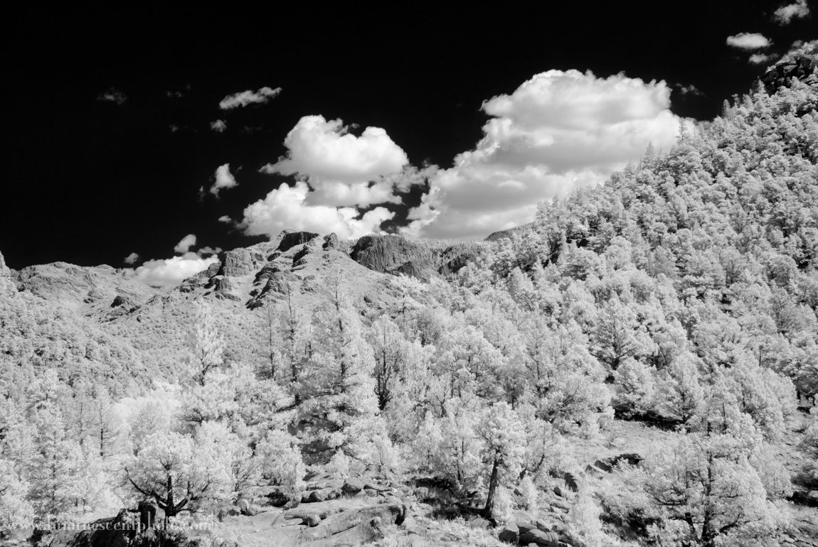 Super-color IR image processed in Silver Efex Pro 2.