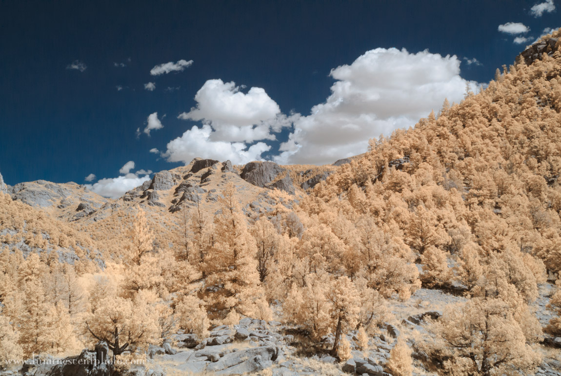 After swapping the red and blue channels of a Super-Color IR image in Photoshop, you get a blue-sky effect.