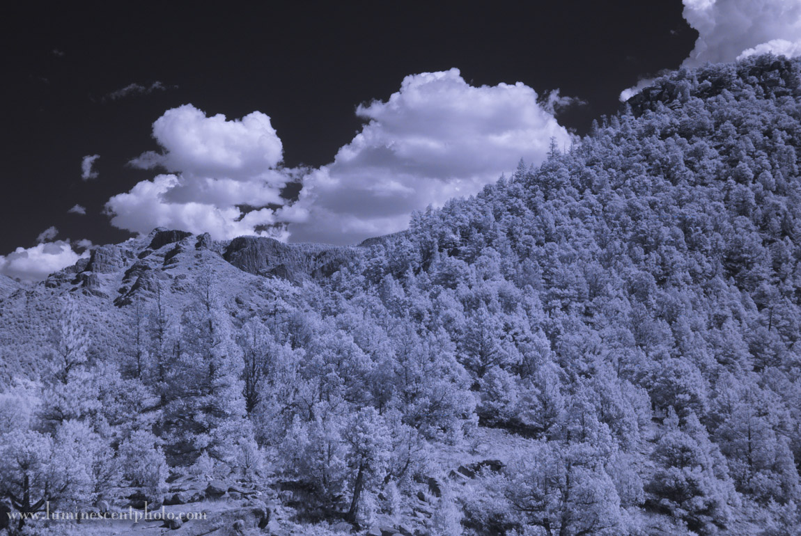 Image captured with a super-color camera and infrared filter on the lens (default conversion)