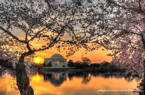 Join us in Washington, D.C. for the cherry blossoms!