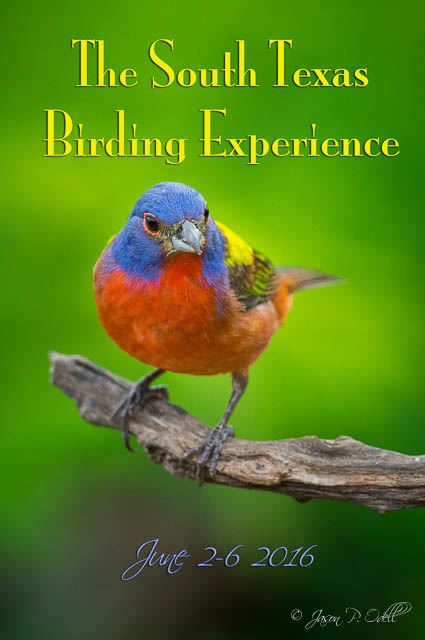 Join me in Texas June 2-6, 2016 for bird photography from private blinds.