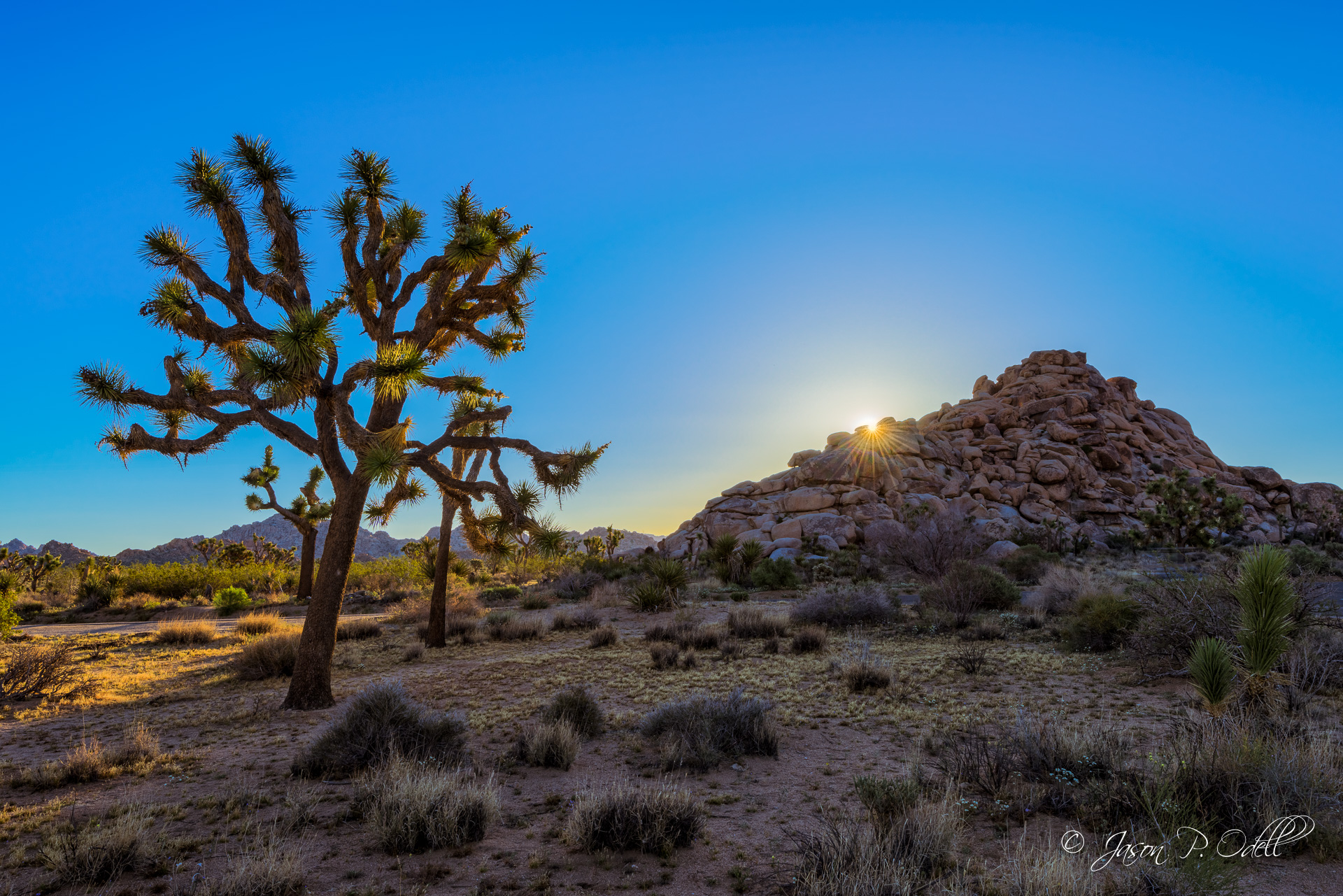 Sunrise in Joshua Tree National Park, California