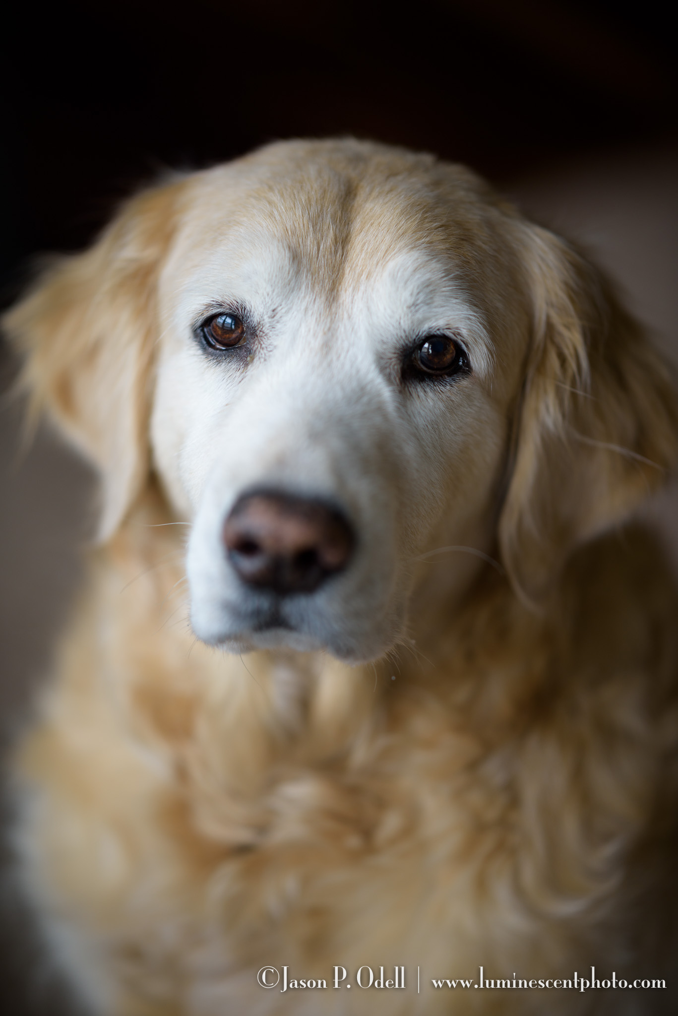 Nikon D810 with 105mm f/1.4E ED Nikkor. 1/250s f/1.4, ISO 100. (Click to enlarge)