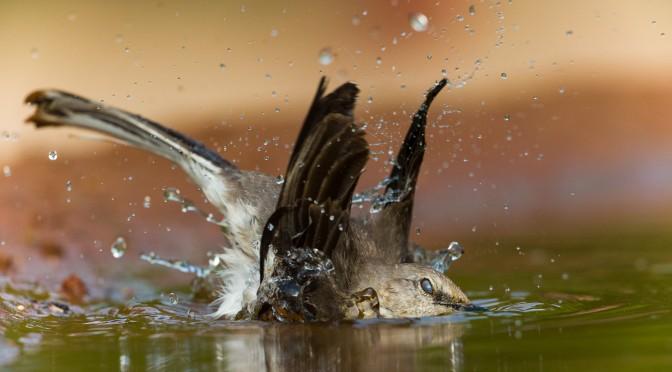 Registration open for Texas Birding 2015