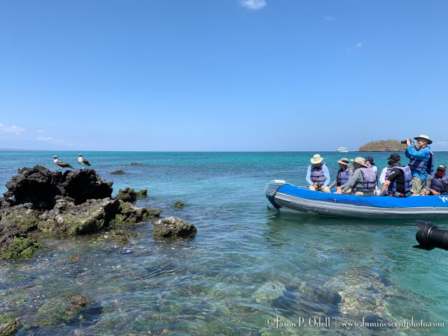 Photographing blue-footed boobies in the Galápagos from our inflatable panga